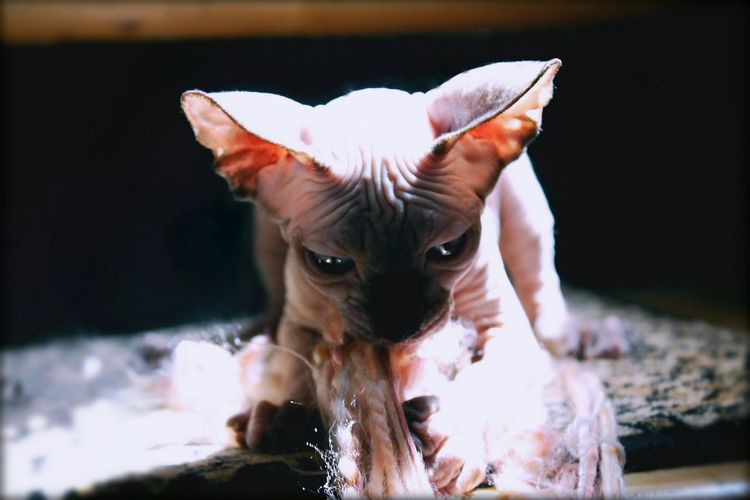 Creative Light And Shadow Kitten String Natural Light Cat Hairless Cat