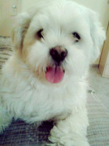 Peluche♥ My Dog