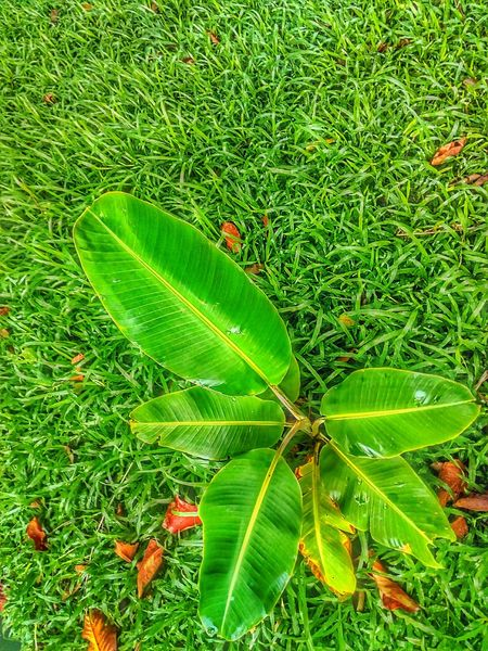 Tree Photography Tree_collection  Tree On The Ground Sapling Beauty Of Nature Sapling Tree Green Color Leaf Nature Grass