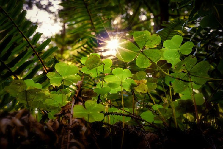 Sunlight streaming through leaves on sunny day