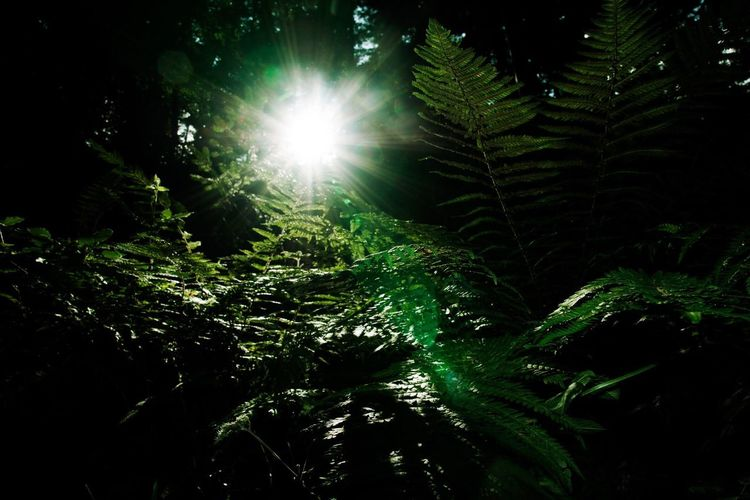 Light in the Darkness Nature Growth Low Angle View Leaf Tree Sunbeam Beauty In Nature Sunlight Green Color Forest Tranquility Plant Outdoors No People Scenics Backgrounds Day Freshness
