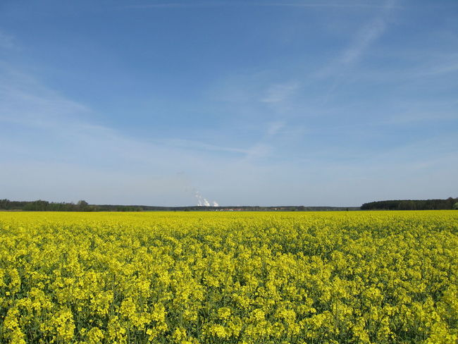 Agriculture Beautiful Field Landscape Nature Relaxing Moments Summer Yellow