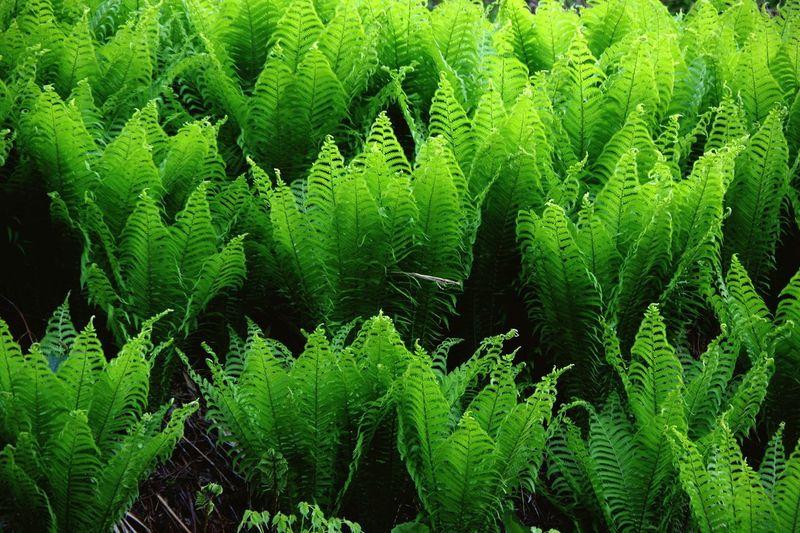 Pentax K-3 十日町市 新潟 星峠 Green Color Plant