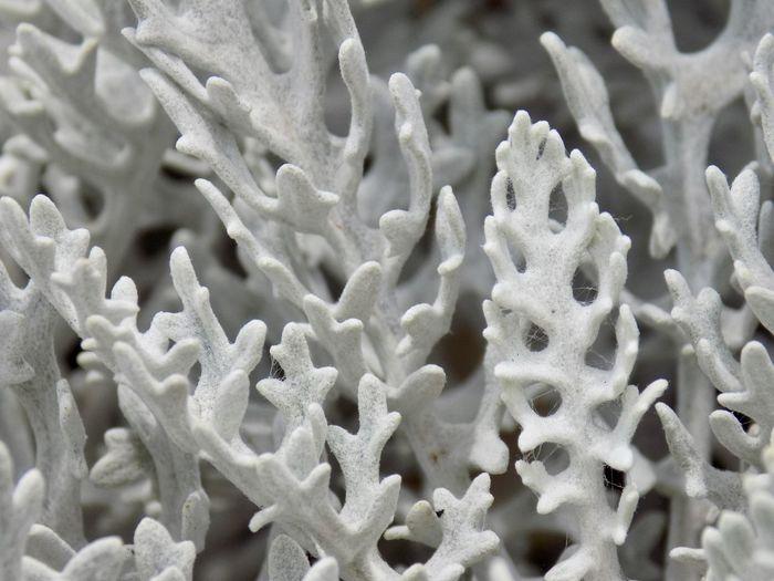 Full frame shot of fresh white flower