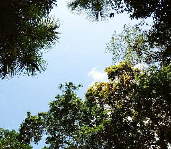 Bosque de trás da morada Sky Tree Nature Beauty In Nature No People First Eyeem Photo