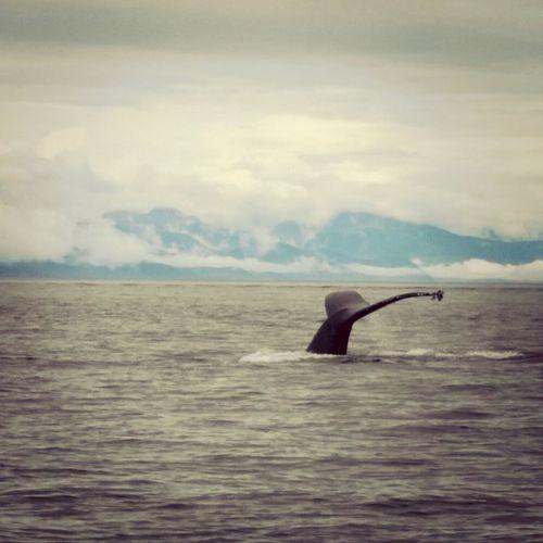 Melancholic Landscapes Tracy Fjord, Ketchikan Alaska