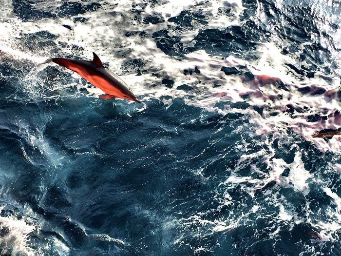 Antartic Dholpin Sea Water Life Saylor Navigation Newworld World Antarticsea Summer Sun Love Wild Lifestyle