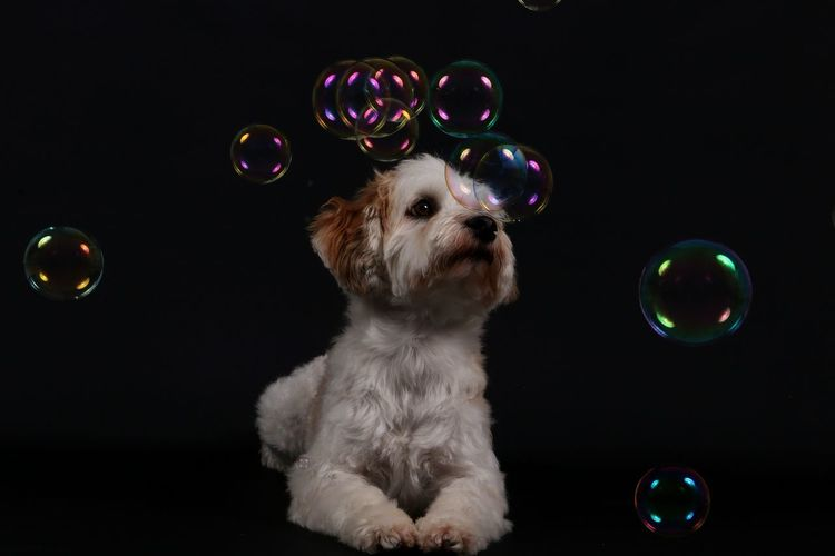 Full frame shot of dog with bubbles against black background