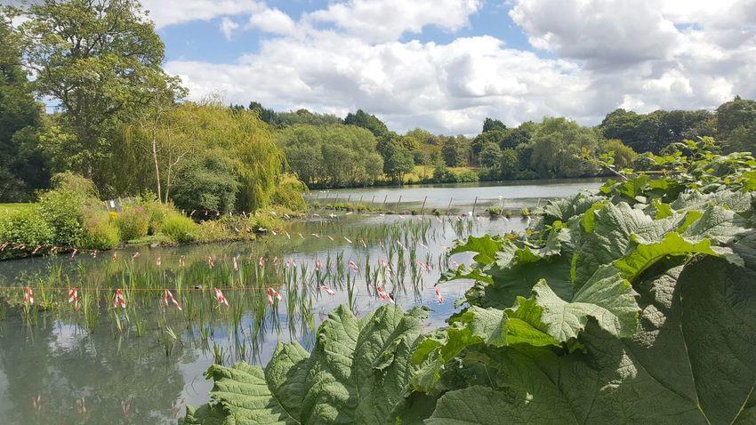 The Vale at Birmingham University Nature Lake Water Tree Cloud - Sky Park