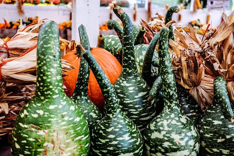 Abundance Choice Close-up Collection Detail Full Frame Gourd Large Group Of Objects No People Ripe Still Life