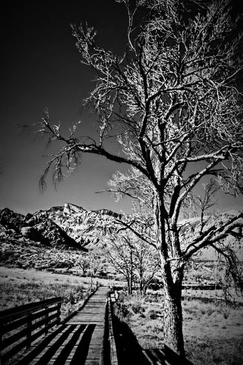 Check This Out Black White Blackandwhite Black & White Nature Hiking Hiking Trail Trees Mountains Redrocks Redrock Lasvegas