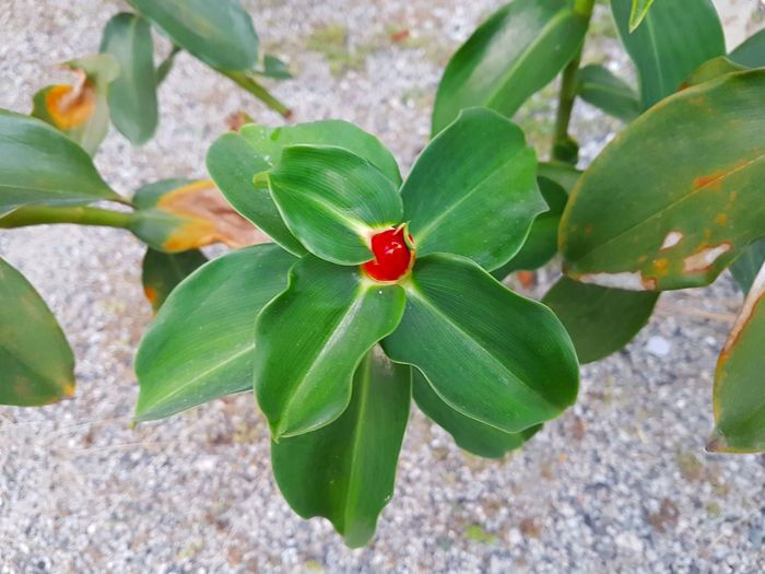 High angle view of red flowers blooming outdoors