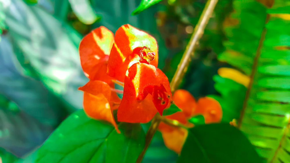Beauty In Nature Flower Flower Head Flowering Plant Freshness Growth Nature Petal Plant