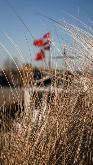 Fishing boat in the harbor of Kühlungsborn Hafen Harbor Bicycle Blurred Motion Boote Day Environment Field Fishing Focus On Foreground Grass Kühlungsborn Land Land Vehicle Mode Of Transportation Nature No People Outdoors Plant Red Selective Focus Sky Sunlight Sunset Transportation