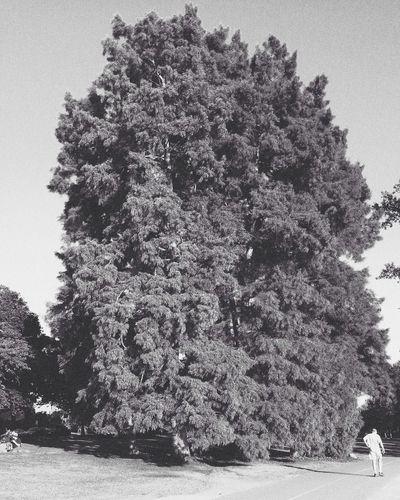 Some trees look cool in Blackandwhite Nature Enjoying Life Taking Photos
