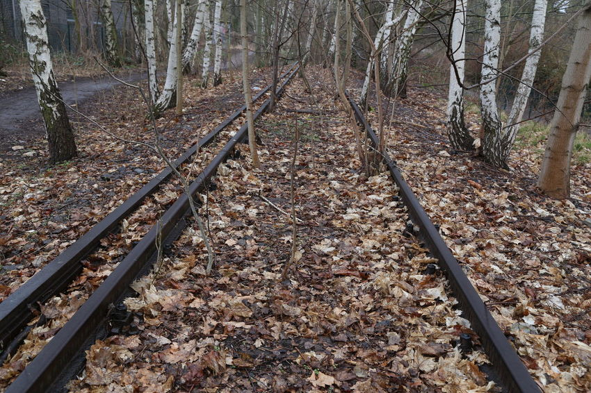 Rail Transportation Railroad Track Track Tree The Way Forward Direction Land Nature Forest Day No People Plant Trunk Tree Trunk Transportation Autumn Plant Part Outdoors Leaf Beauty In Nature WoodLand Change