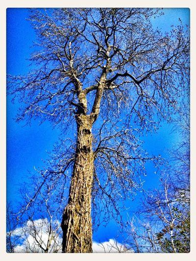 Sky_collection Treetastic Light It Up Blue TreePorn