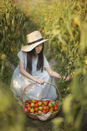 High angle view of girl picking tomatoes in farm
