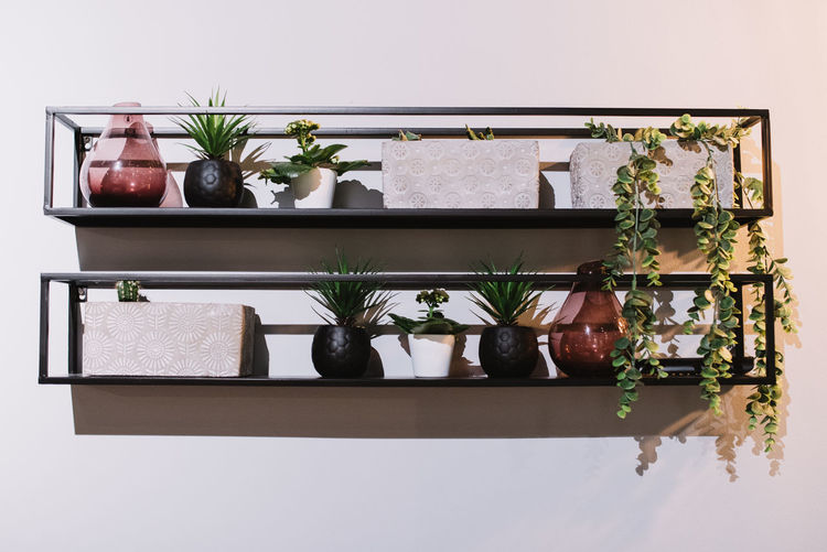 Close-up of potted plants at home