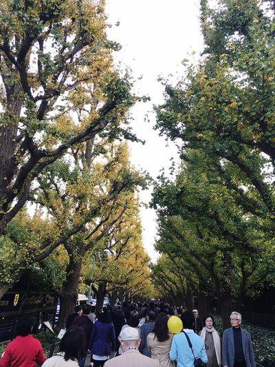 パン食べながら歩きました。 Autumn🍁🍁🍁 Ginkgo Tree Autumn Leaves Autumn Colors Beautiful Enjoying The View Walking On The Road