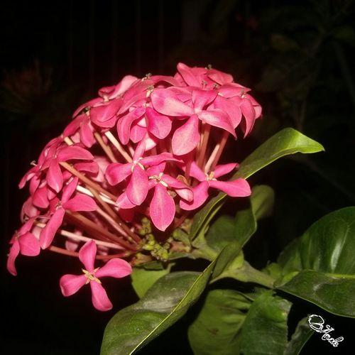 Avare SP BRASIL 🇧🇷☀️ Mumuzinho First Eyeem Photo Bom Dia ❤ Boa Noite ✌❤ Natureza 🐦🌳 Mexico Secret Garden Instagram Mi Amor ♥