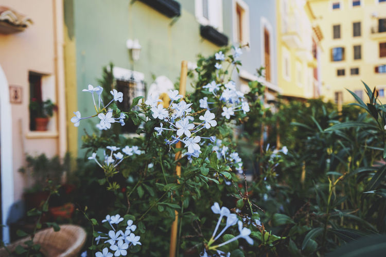 Flowers growing on plant outside house
