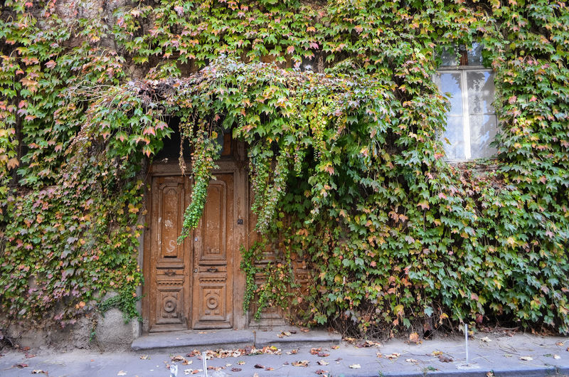 Ivy on closed door of house