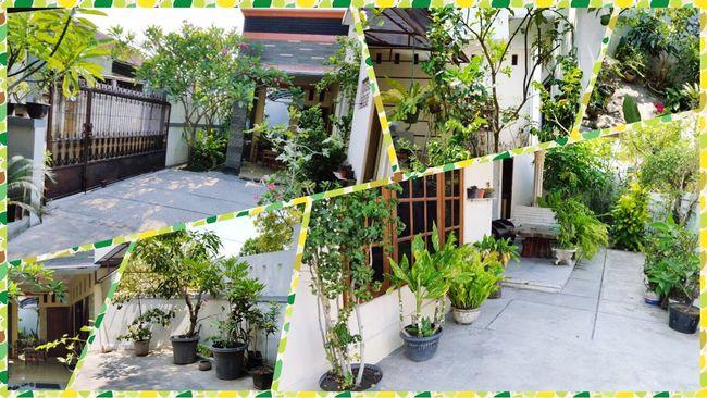 INDONESIA Surakarta Jawatengah Hijau Green Fresh Griyasunu
