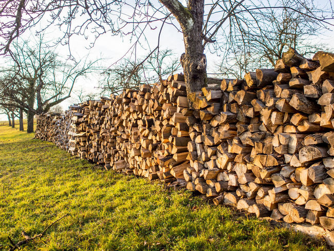 Firewood for the heating periode Tree Stack Plant Log Large Group Of Objects Timber Wood Nature Grass Abundance Lumber Industry Forest No People Field Firewood Deforestation Wood - Material Land Day In A Row Woodpile Outdoors Stone Wall