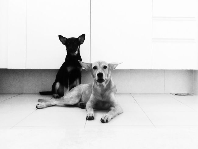 EyeEm Selects Pets Dog Domestic Animals Mammal Animal Themes Indoors  Sitting One Animal No People Portrait Day