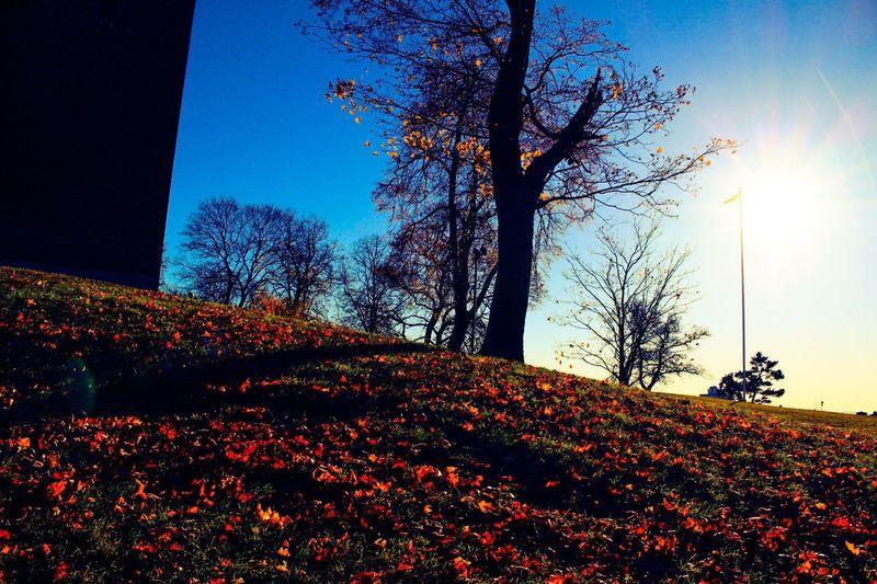 Stockholm View Stockholm.se Orange Color Colorful Eyeemgallary Autumn Collection Autumn Colors Vasastan Trees EyeEm Gallery Autumdays Nature_perfection Naturebrilliance Nature_collection Landscape_collection EyeEmNatureLover