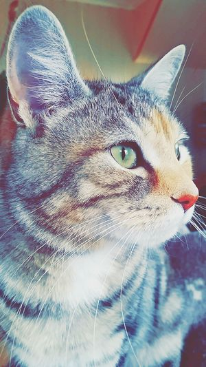 My Cat Love You Colorful Cat Betzy Check This Out Beautiful Animal Cute