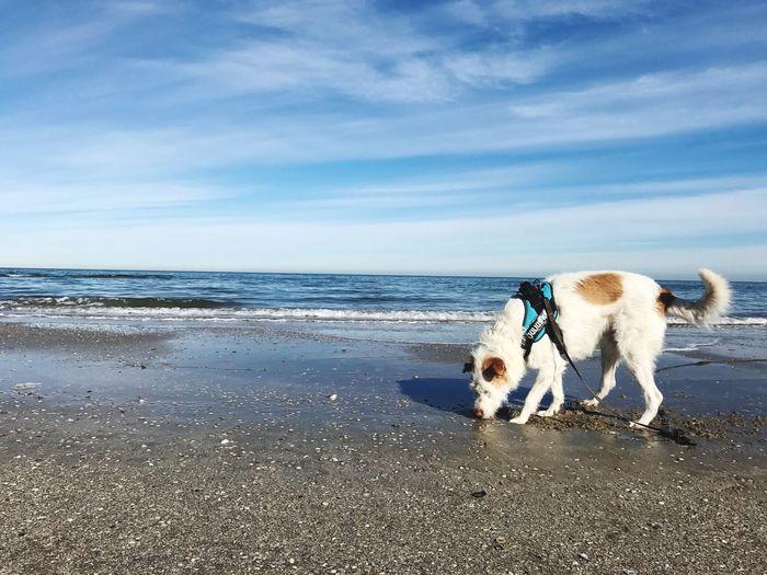 EyeEm Selects Domestic Domestic Animals Pets Canine Dog Mammal Animal Themes Beach One Animal Sea Vertebrate Water Sky Cloud - Sky Land Horizon Over Water Animal Horizon Day No People