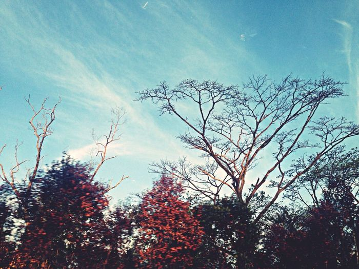 """experiencing """"Autumn"""" in Singapore for the first time. Autumn Sky Clouds And Sky Nature"""