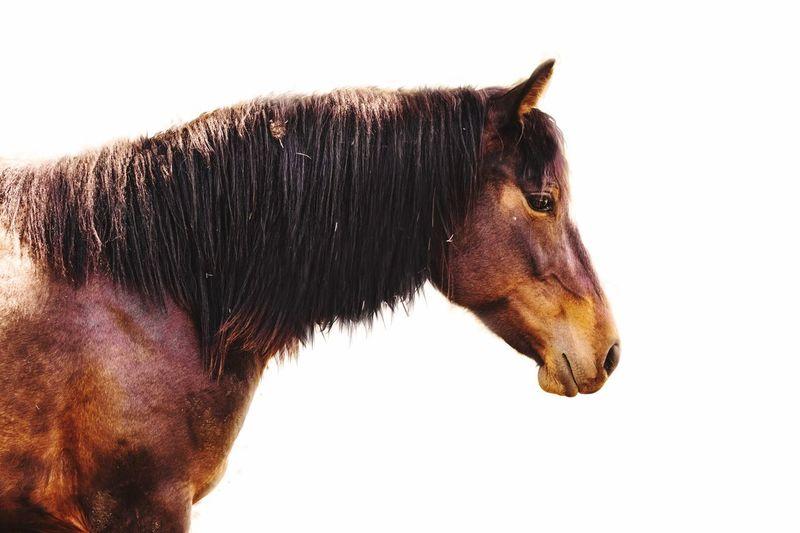 Horse Equine