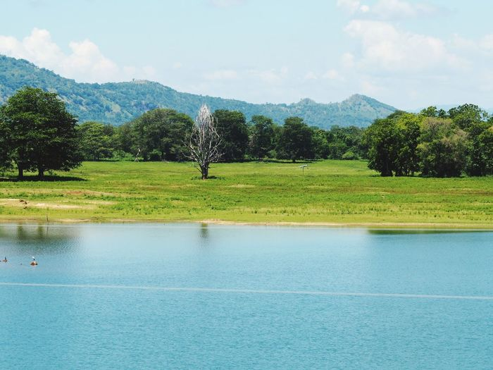 Sri Lanka Tree Nature Mountain National Park
