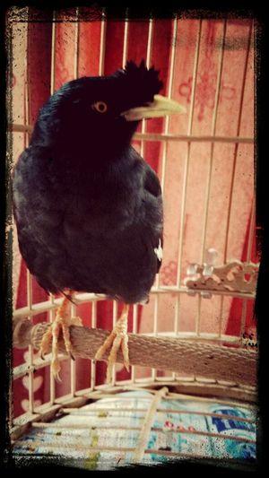可爱的鸟!!!