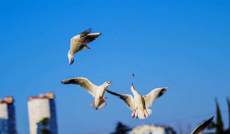 Bird Flying Gulls Gulls In Flight Street Photography Sochi Food Stories