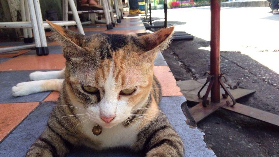 I am Ler Tarr Thai Street Cat