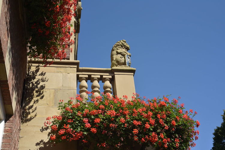 Architectural Column Architecture Balcony Beauty In Nature Blossom Blue Blue Sky Botany Day Façade Flowering Fragility Freshness Garden Growth In Bloom Lion And Shield Low Angle View Nature Nikon 50mm F/1.8 Plant Red Flowers Resedential Building Springtime
