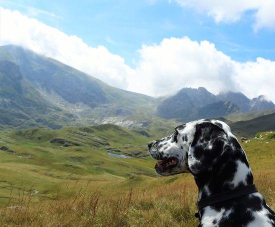 Alps Animal Dalmatian Dalmatian Dog Dalmatians Dalmatiansofinstagram Dog Dogs Hiking Italia Italy Italy❤️ Italy🇮🇹 Lake Mountain Mountains Mountains And Sky No People Piedmont Piemonte
