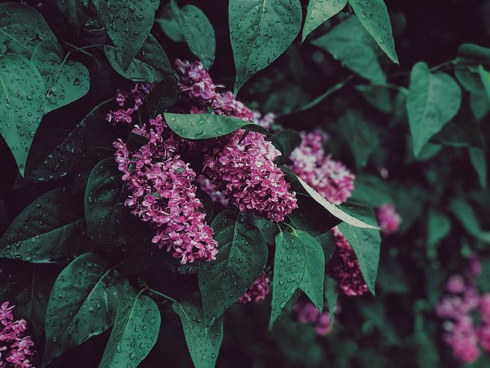 Plant Growth Beauty In Nature Plant Part Leaf Flowering Plant Flower Close-up Fragility No People Nature Freshness Focus On Foreground Vulnerability  Green Color Day Petal Inflorescence Flower Head Outdoors