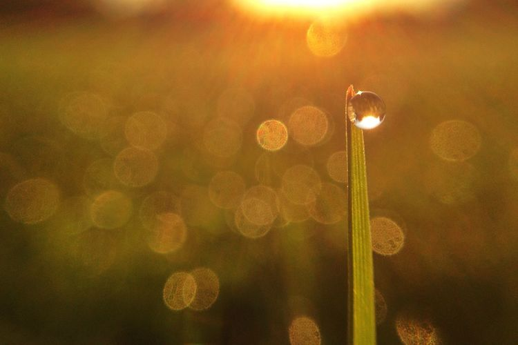 You're one in a million Light Up Your Life EyeEm Best Shots EyeEm Best Shots - Nature Macro