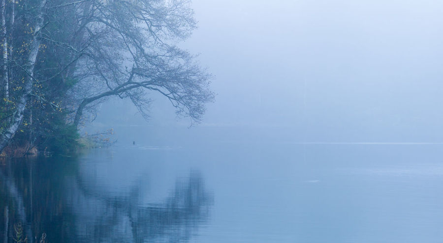 Misty lake in the forest. EyeEmNewHere Water Tree Tranquility Tranquil Scene Beauty In Nature Fog Scenics - Nature Reflection Lake No People Nature Idyllic Non-urban Scene Outdoors Hazy  Evening Gloomy Blue Ahtumn Forest Forestscape Autumn Mood