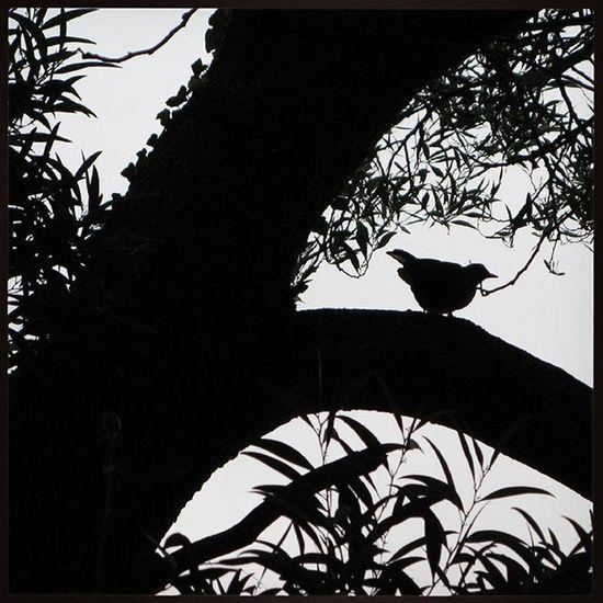 Ig_europe Ig_bw Ig_spain Ig_cantabria Estaes_cantabria Loves_spain_nature Loves_spain Instagrafic Pajaro Bird Siluet Bnw Bw_photooftheday Bw Blancoynegro Blackandwhite Detalhes_em_foco Bw Nature Кантабрия Комильяс птица чернобелоефото Чб Comillas, Cantabria.