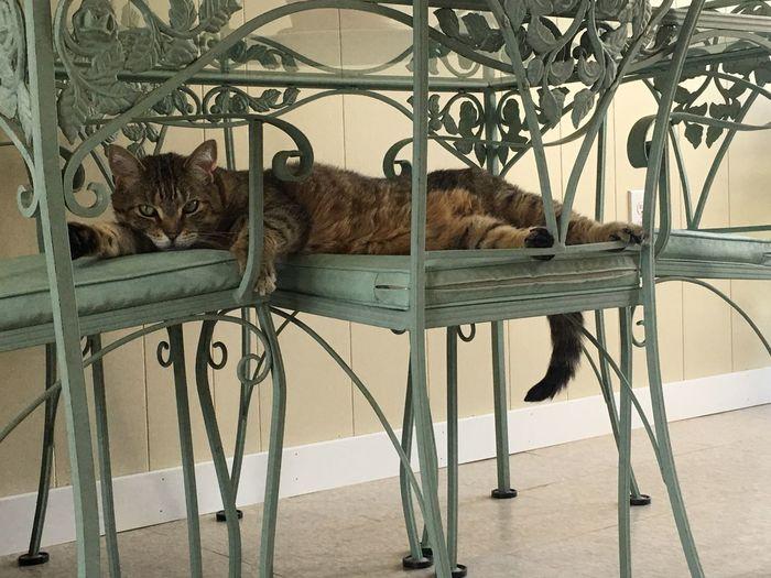 Hello World Hi! Relaxing Streamzoofamily Streamzoo Summertime Mybaby Cats Of EyeEm Cat Cat Lovers Sweetface Summerdays