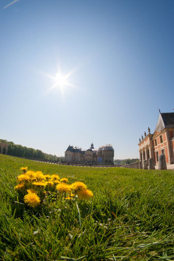 A Beautiful Yellow Flowers On A Green Grass With The Chateau De Vaux le Vicomte In The Background Taken Using Fisheye Lens. Architecture Architecture Beautiful Building Exterior Built Structure Château Europe Field Flower France Grass History Architecture Holiday Lens Flare Maincy Melun Nature Paris Structure Sun Sunbeam Sunlight Tourism Travel Destinations Vicomte Your Ticket To Europe