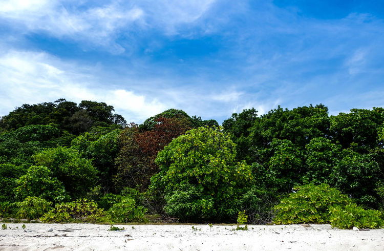 Beautiful view on Koh Khai (Egg island), Satun, Thailand; blue sky with white cloud, many fresh trees and white sand Freshness Green Color Natural Nature Sunlight Sunny Travel Tree Beach Cloud - Sky Fresh Island Landscape Outdoor Sand Scene Summer
