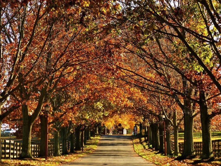 DOWN THE TO WINTER Fall Peaceful Scene Road Autumn Beauty In Nature Branch Change Day Diminishing Perspective Growth In A Row Leaf Nature No People Orange Leaves Outdoors Park - Man Made Space Red Leaves And Green Leaves. Scenics The Way Forward Tranquil Scene Tranquility Tree