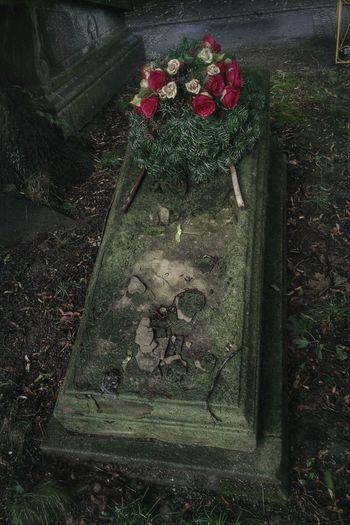 Rakowicki 2 NEM BadKarma NEM Memories Cemetery
